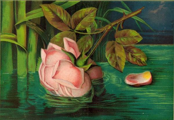 Rose water (600 x 414)