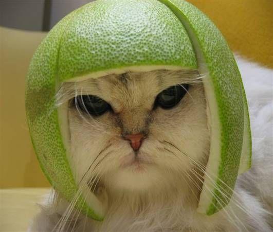 Catmelonhead