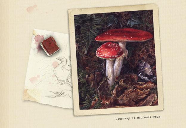 Fungi_5114