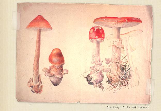 Fungi_5312