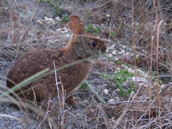 Rabbitonbeach