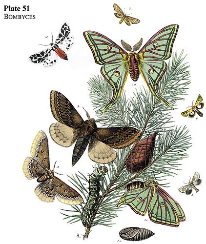 Moths